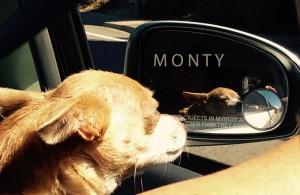 monty
